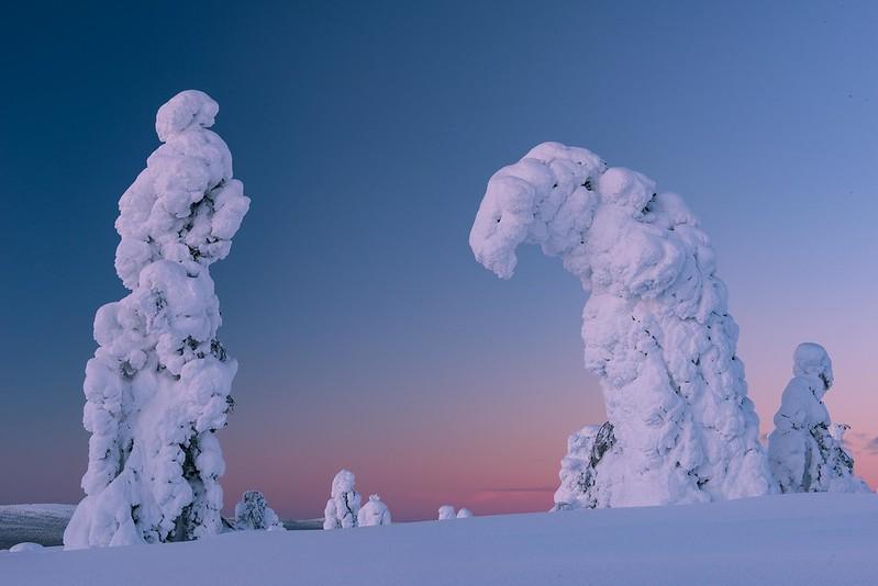The hanging tree - Äkäslompolo