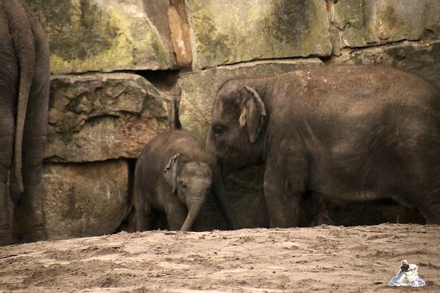 Tierpark Berlin 25.03.2016  0205