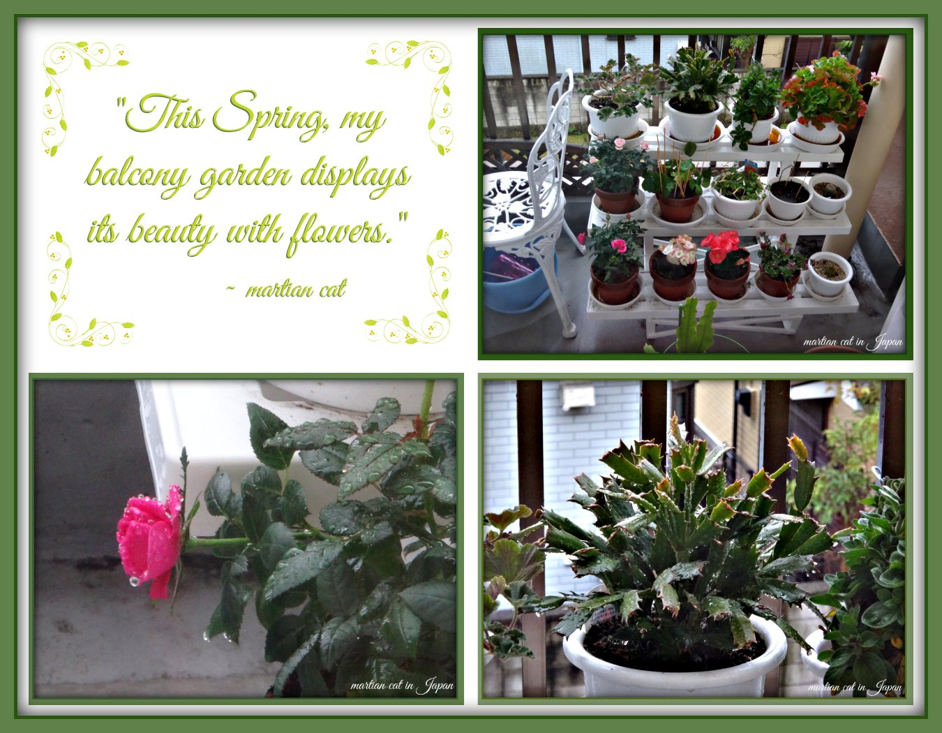 """This Spring, my balcony garden displays it beauty with flowers."""