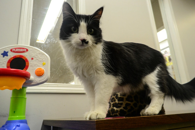 Visiting with the Cats at Second Chance
