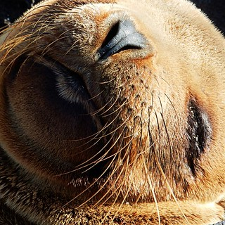 Sea lion - Close-ups of wildlife in Galapagos islands - Ecuador