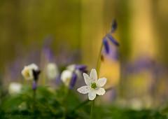 White flower in purple forest
