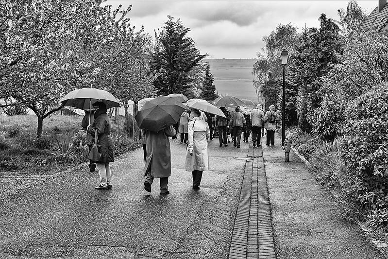Les parapluies de Nordheim (67) 26591519226_4ac30b3fd1_c