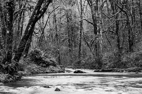 blackandwhite usa nature water monochrome creek forest washington rocks unitedstates northwest pacificnorthwest northamerica washingtonstate cedarcreek blackandwhitephotography naturephotography