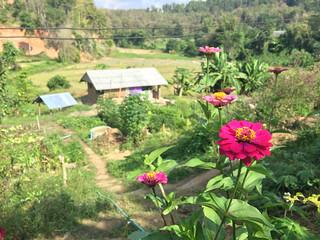Mindful Farm, Thailand