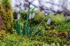 Zeichen des Frühlings ( Signs of Spring )
