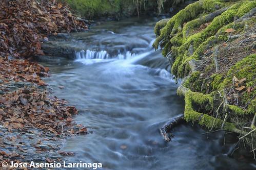Parque Natural de Gorbeia  #DePaseoConLarri #Flickr -3058