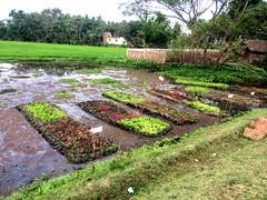 Floating garden in Puri district