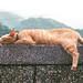 CAT by mookio 阿默