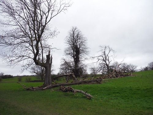 Trees in Spittal Brook Valley