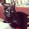 La princesa Nana #catstagram #cats #catsofinstagram #blackcat