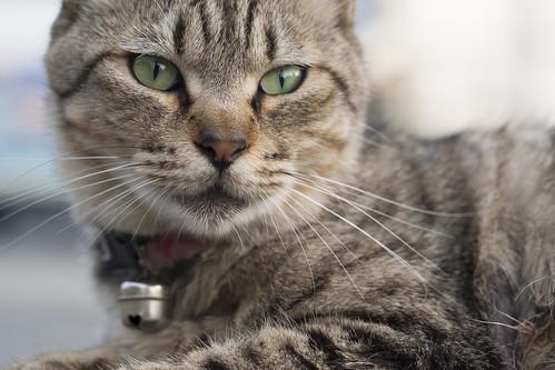 Macro Cat 1