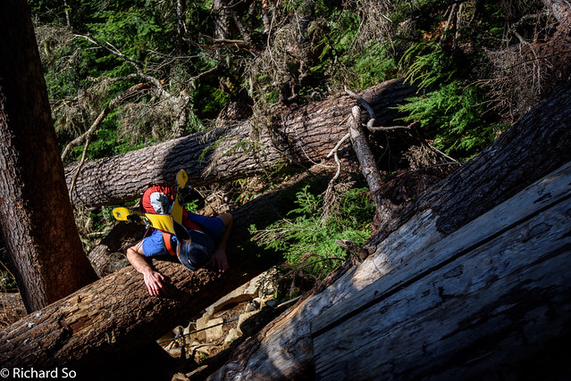 Blowdown on the Binkert Trail