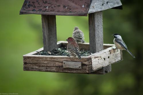 ontario canada birds easter jane goderich portalbert huroncounty