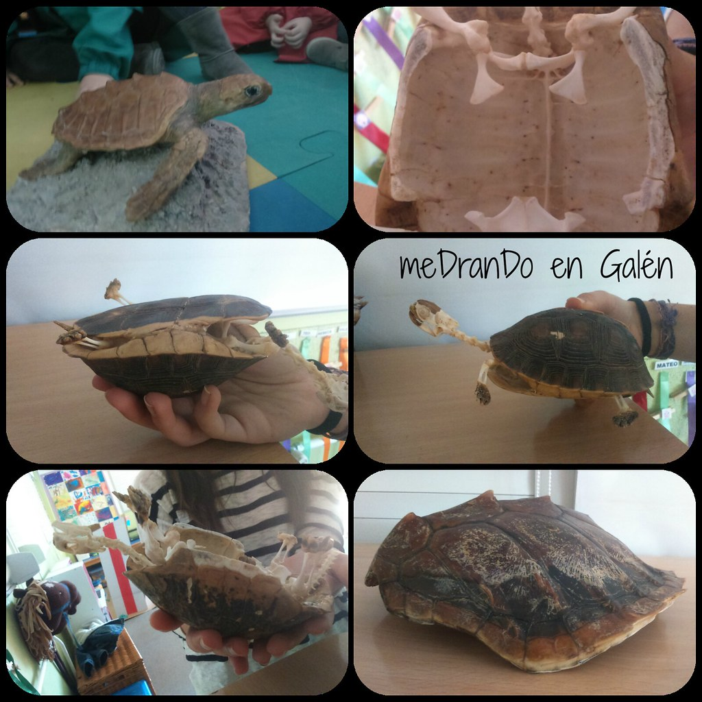 Colaboración Nuria tartaruga