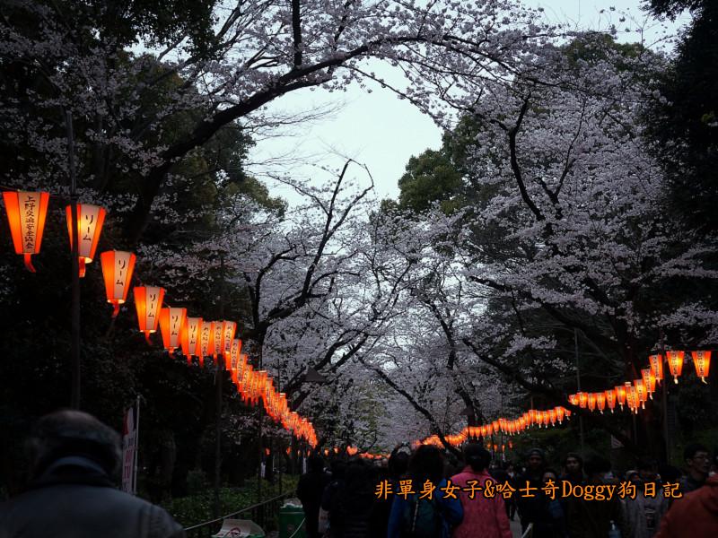 日本東京上野恩賜公園櫻花02