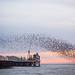 Starling Murmuration at Brighton Pier by lomokev