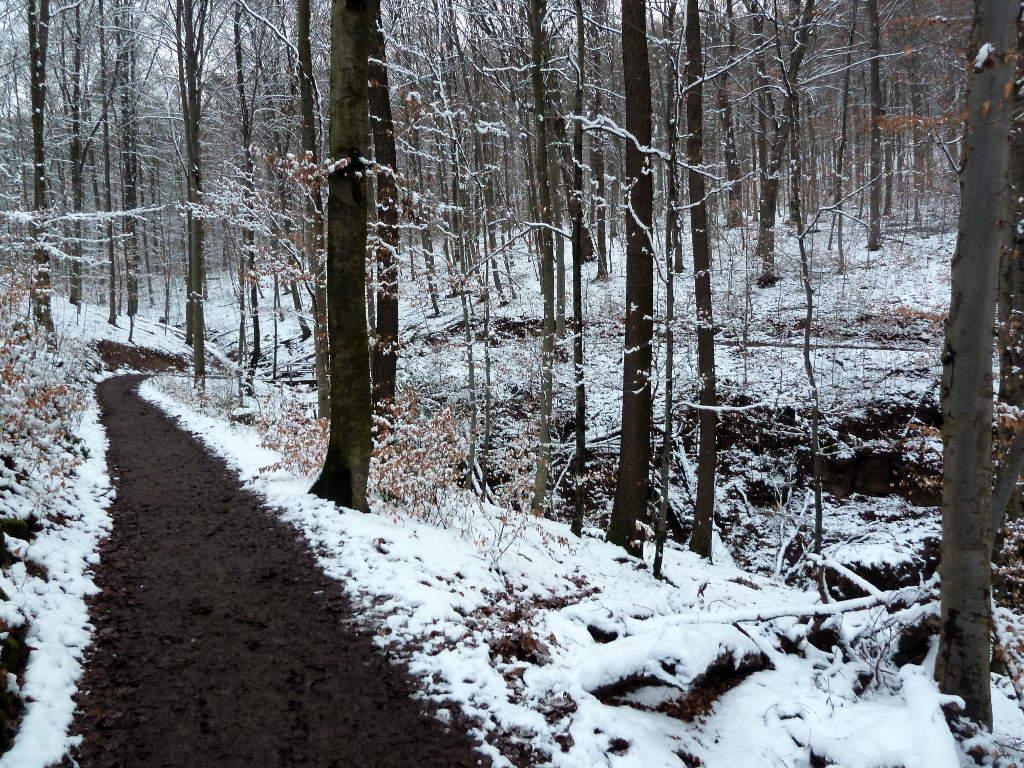 trees-track