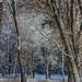 Trees in the Meadow by jlm0506@att.net