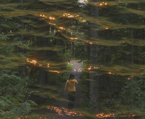 suomi finland woods