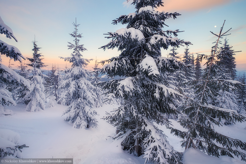 Snowy trees at the winter mountain hills