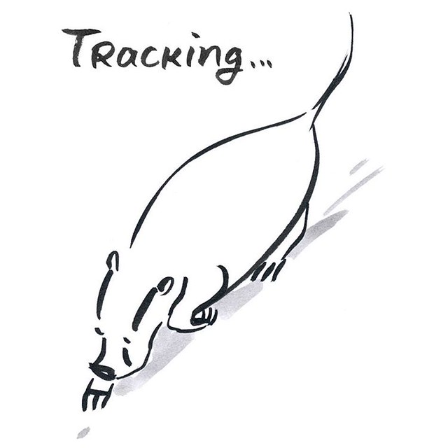 Tracking  #badger #badgerlog #tracking