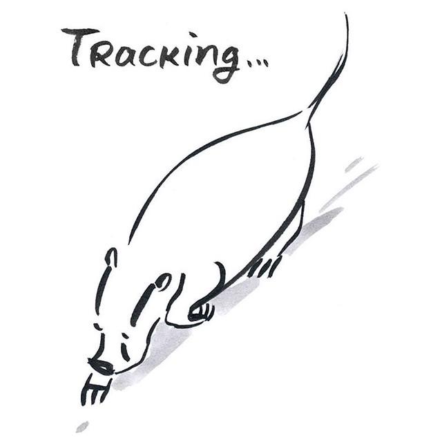 Tracking  #badger #badgerlog #tracking