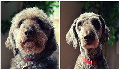 River: before and after haircut