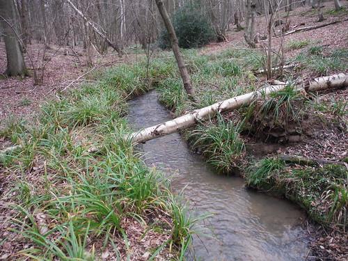 Spittal Brook, Cowheath Wood