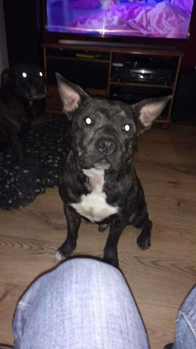 Dave - Available