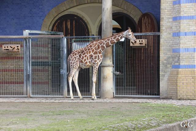 Zoo Berlin 31.01.20169