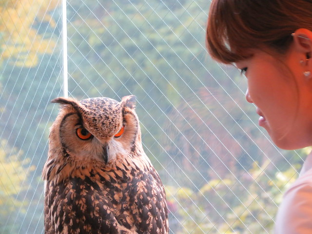 Owl Village, Harajuku