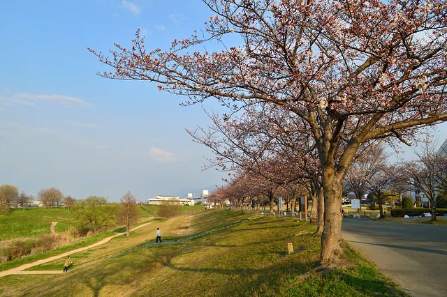 筑後川河川敷の遊歩道