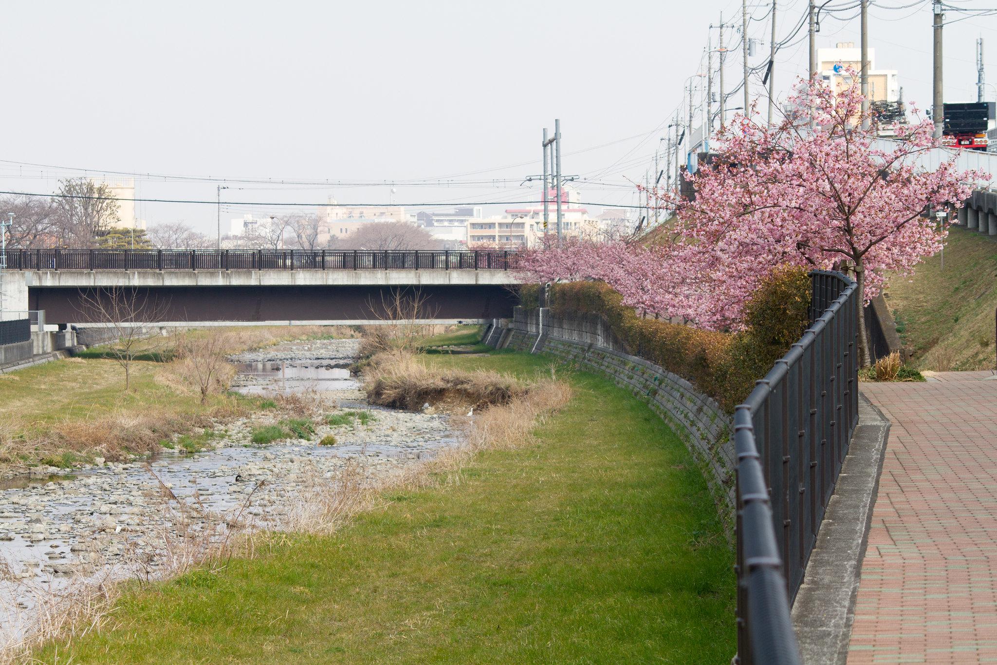 2016-03-04 カワセミ 001-21