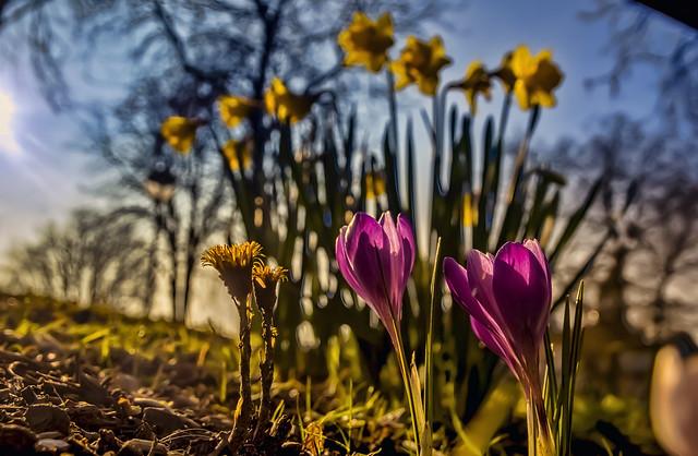 Spring grandeur
