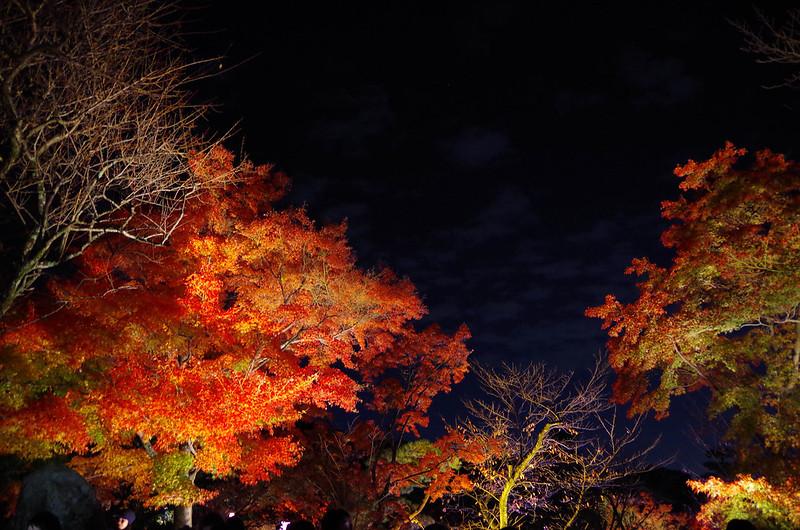 20141122-武奈ヶ岳(Saku)-0100.jpg
