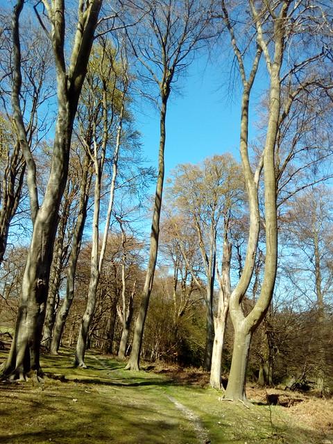 Frithsden Beeches - Berkhamsted Circular