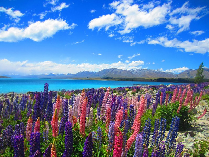 South-Island-New-Zealand