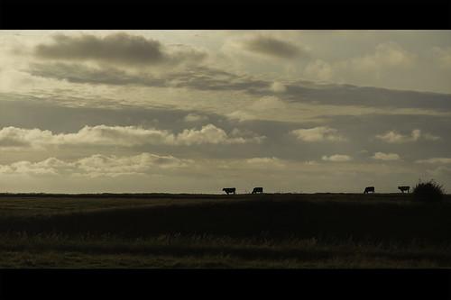 summer canon denmark countryside dania 6d 24105 lato wieś