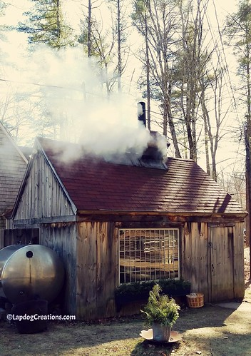 It's maple sugaring season in New England! #spring #sugarshack #maplesugar #newengland #MadeInNewHampshire #LapdogCreations ©LapdogCreations