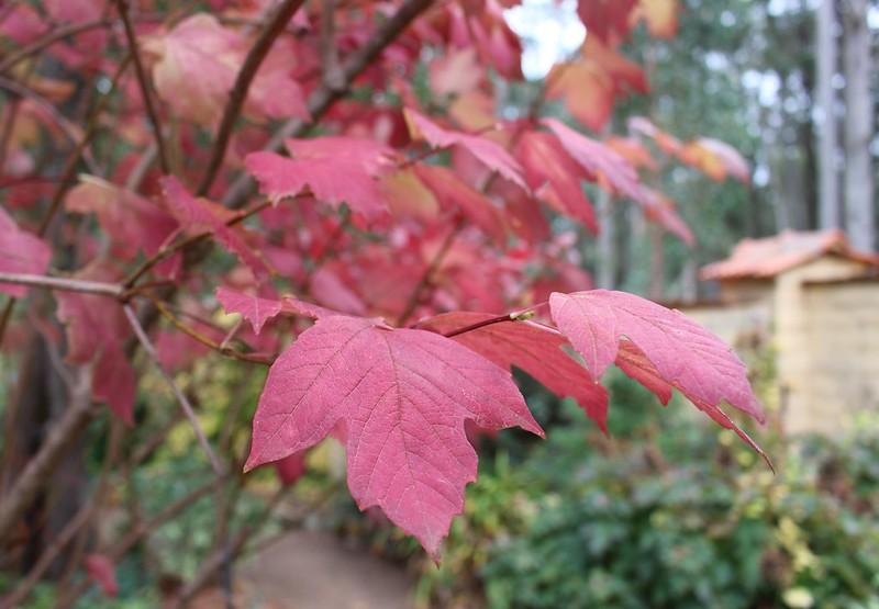 The garden, Trentham