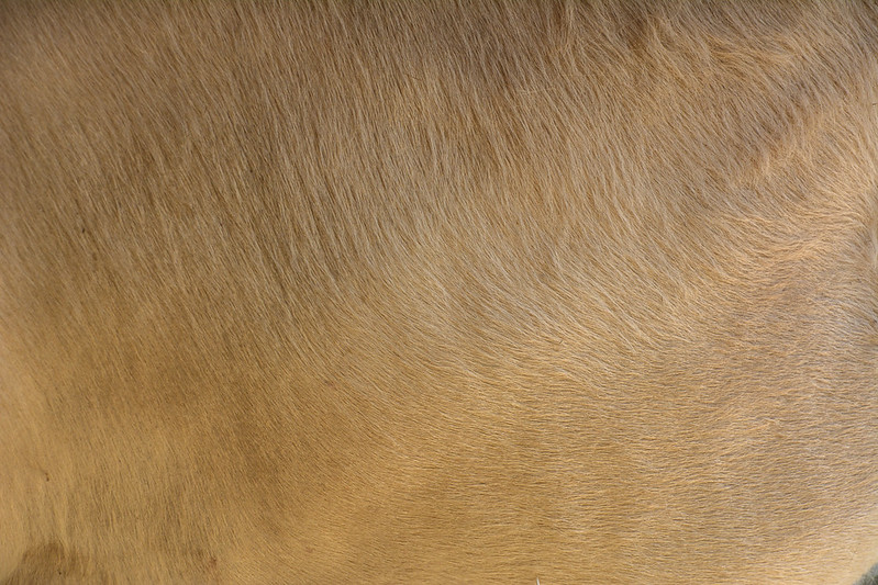 animal-fur-closeup-texturepalace-16