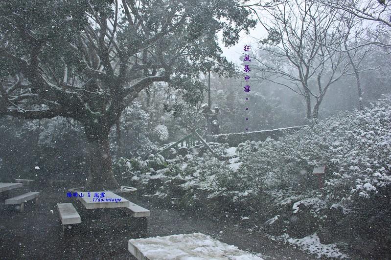 2016-台北陽明山-瑞雪-難得一見的雪白山景-17度C隨拍 (130)