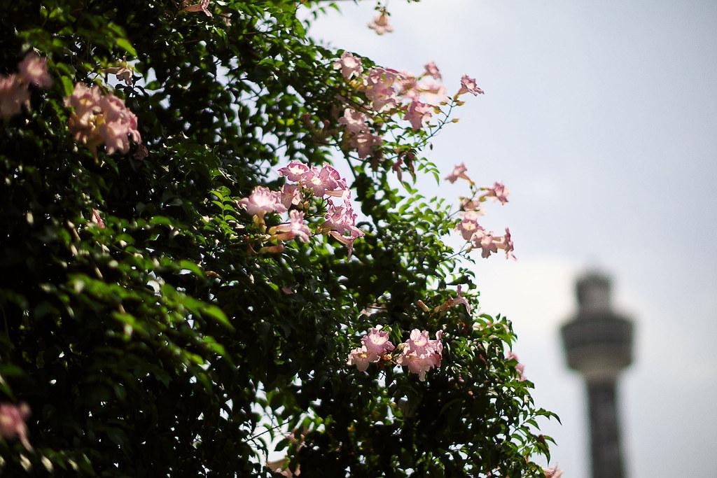 ヨコハマ散歩 山下公園の写真