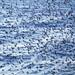 Brighton Starling Murmuration by lomokev