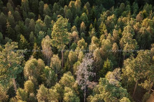 skog sverige träd swe färgelanda västragötaland flygfoto