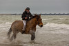 Fun in the surf with a horse