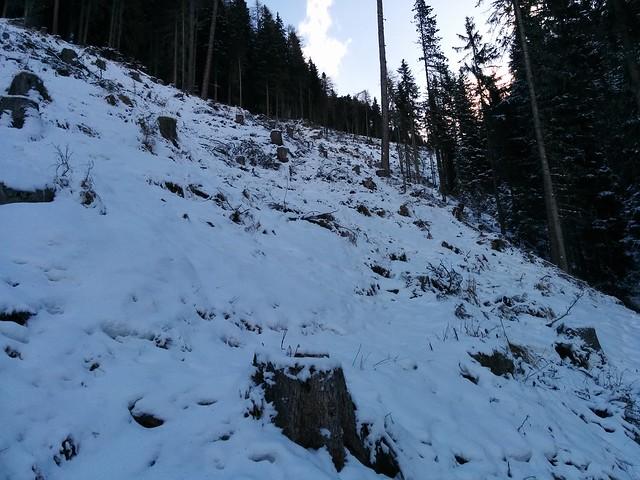 Aufstieg über die Waldschneise