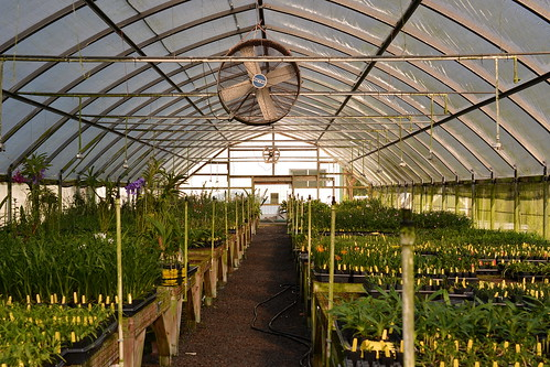 HOF Greenhouse Private Collection