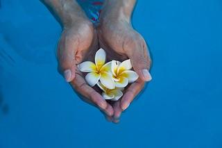 手に乗せた花 by pixabay